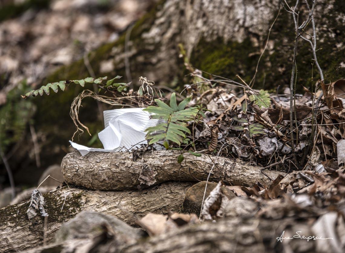 Nhiếp ảnh gia Mỹ 'gây sốt' vì bộ ảnh giấy vệ sinh 'sắp tuyệt chủng' -2