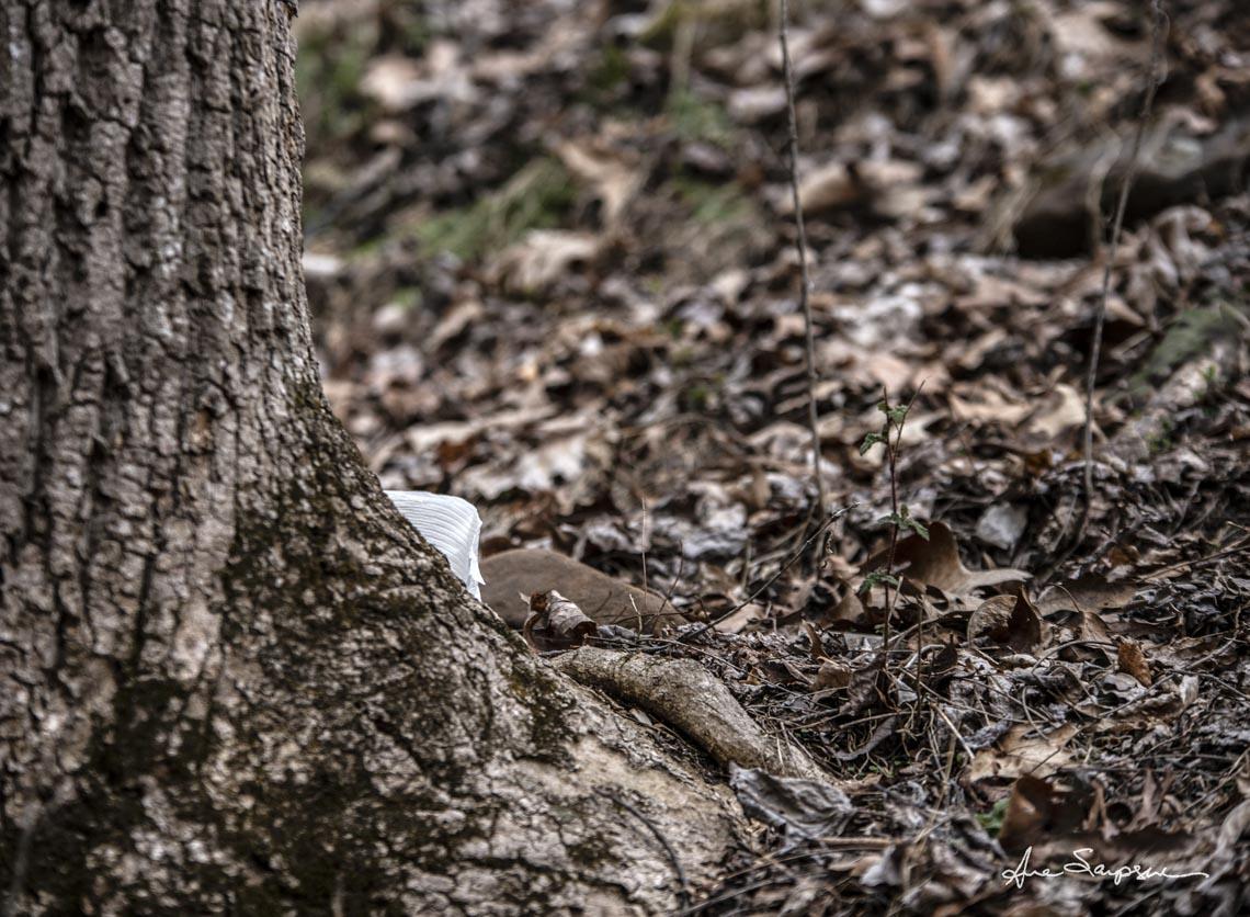 Nhiếp ảnh gia Mỹ 'gây sốt' vì bộ ảnh giấy vệ sinh 'sắp tuyệt chủng' -3