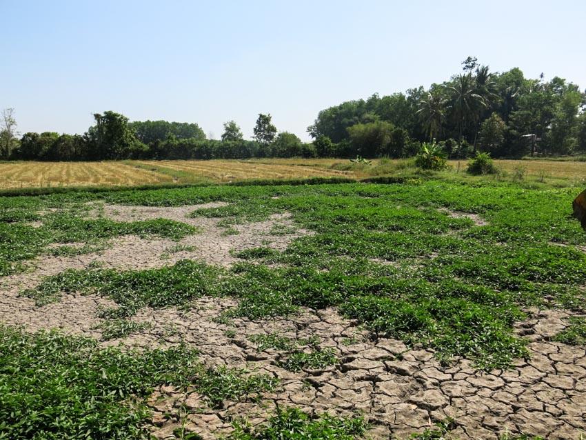 Những trầm tích văn hóa bên dòng vàm cỏ đông -1