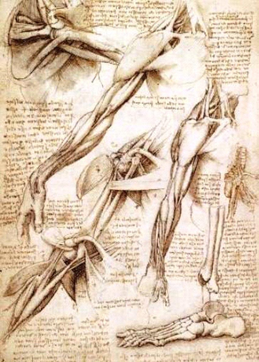 Sự uyên bác tạo nên sức sống nghệ thuật của Leonardo da Vinci -3