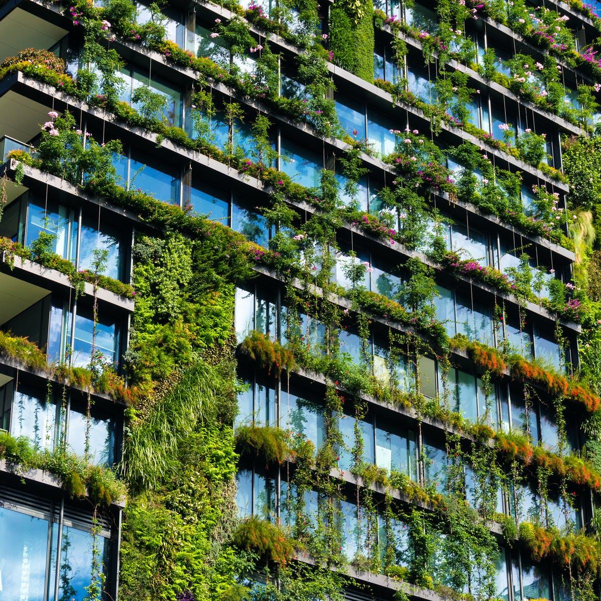 Tản mạn về cây xanh đô thị -02