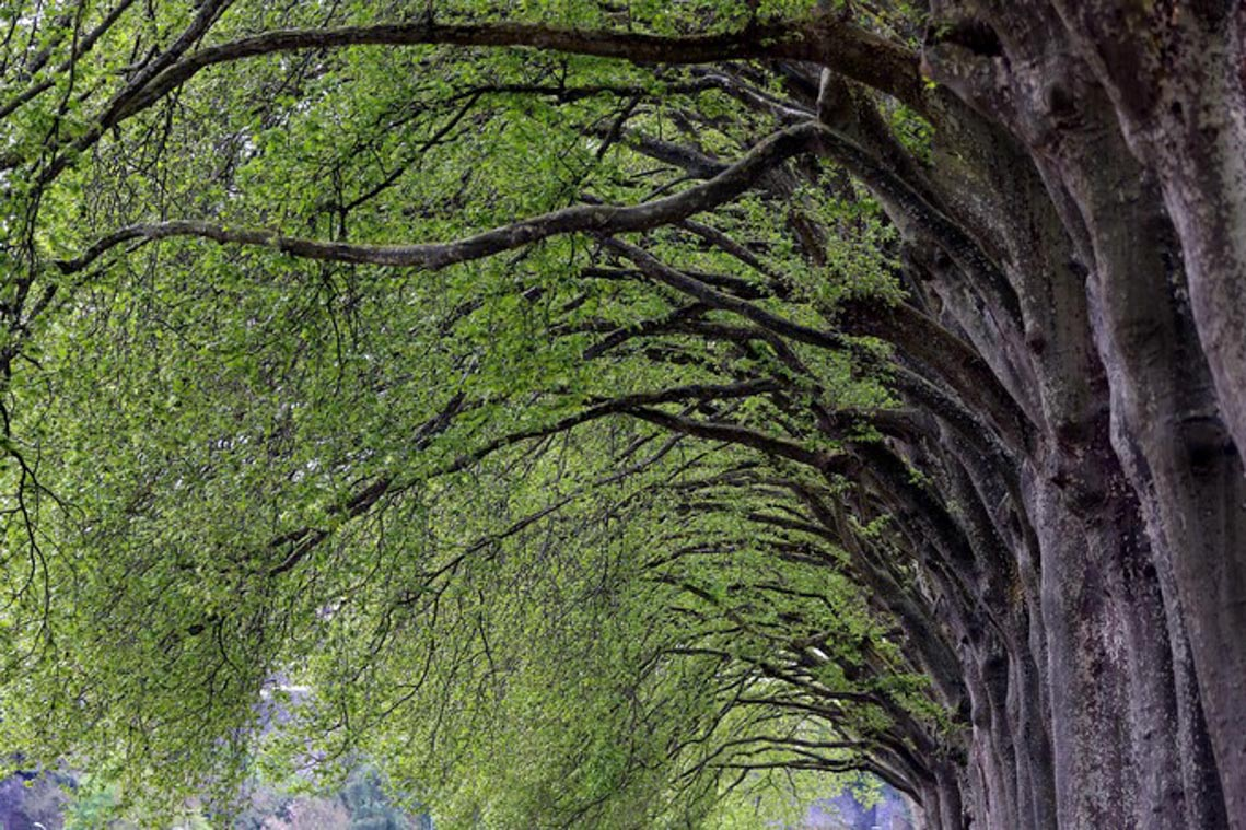 Tản mạn về cây xanh đô thị -5