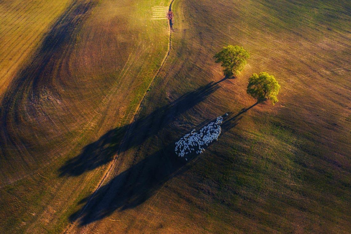Thiên nhiên tuyệt đẹp trong cuộc thi nhiếp ảnh quốc tế 2020 -3