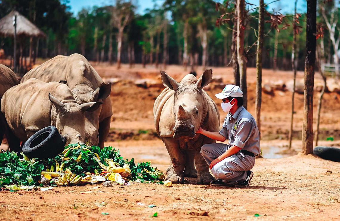Gia đình tê giác ở Vinpearl Safari có thêm thành viên mới chào đời -1