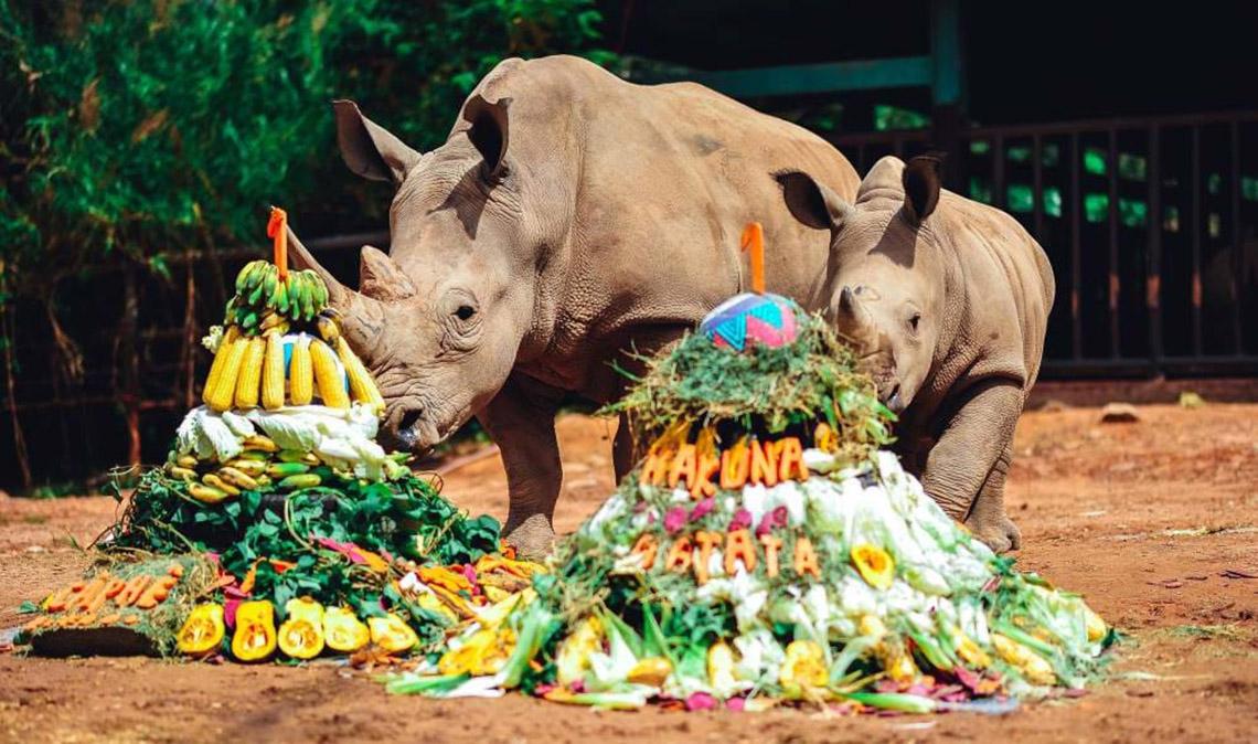 Gia đình tê giác ở Vinpearl Safari có thêm thành viên mới chào đời -2