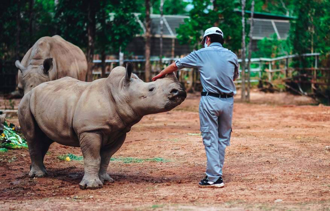 Gia đình tê giác ở Vinpearl Safari có thêm thành viên mới chào đời -3