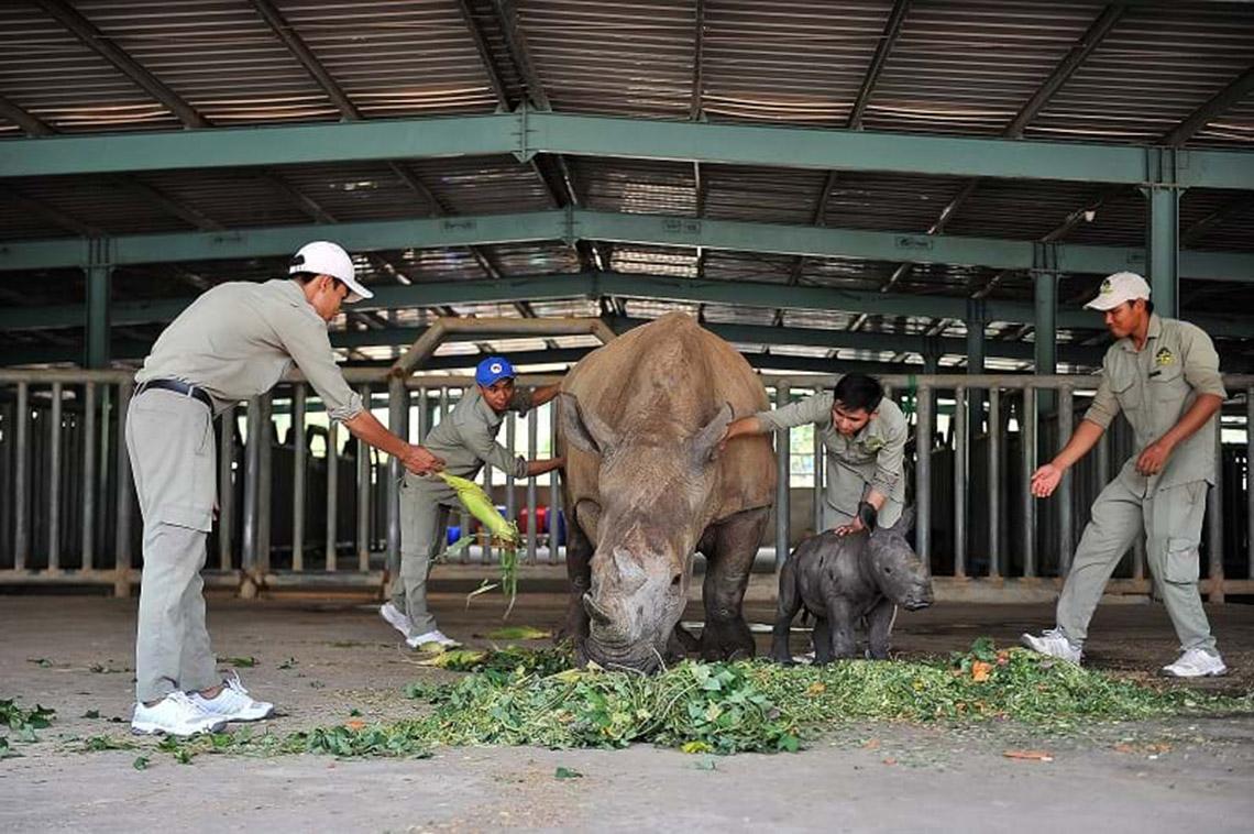 Gia đình tê giác ở Vinpearl Safari có thêm thành viên mới chào đời -8