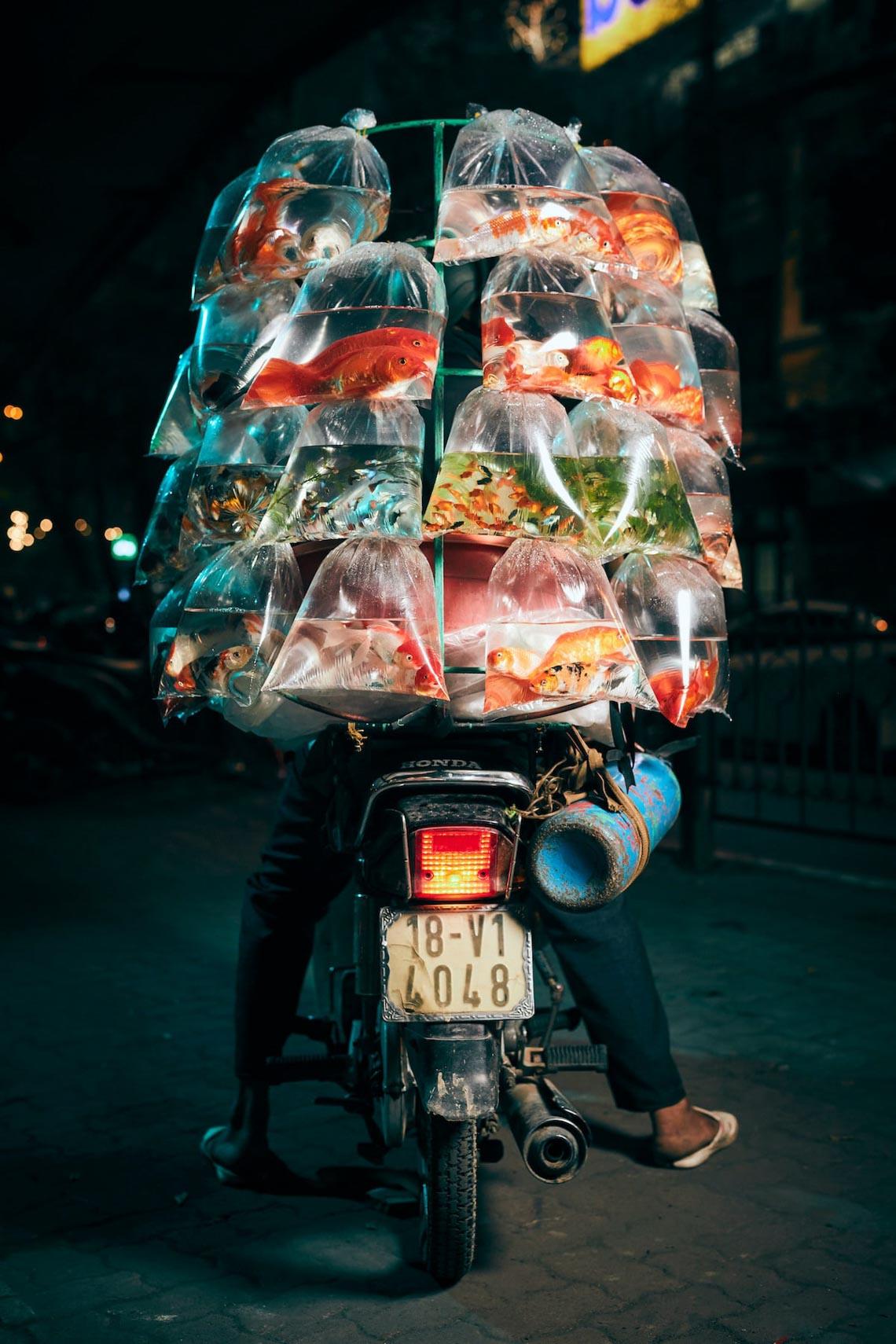 Xe bán cá cảnh rong ở Việt Nam chiến thắng giải ảnh tại Mỹ -1