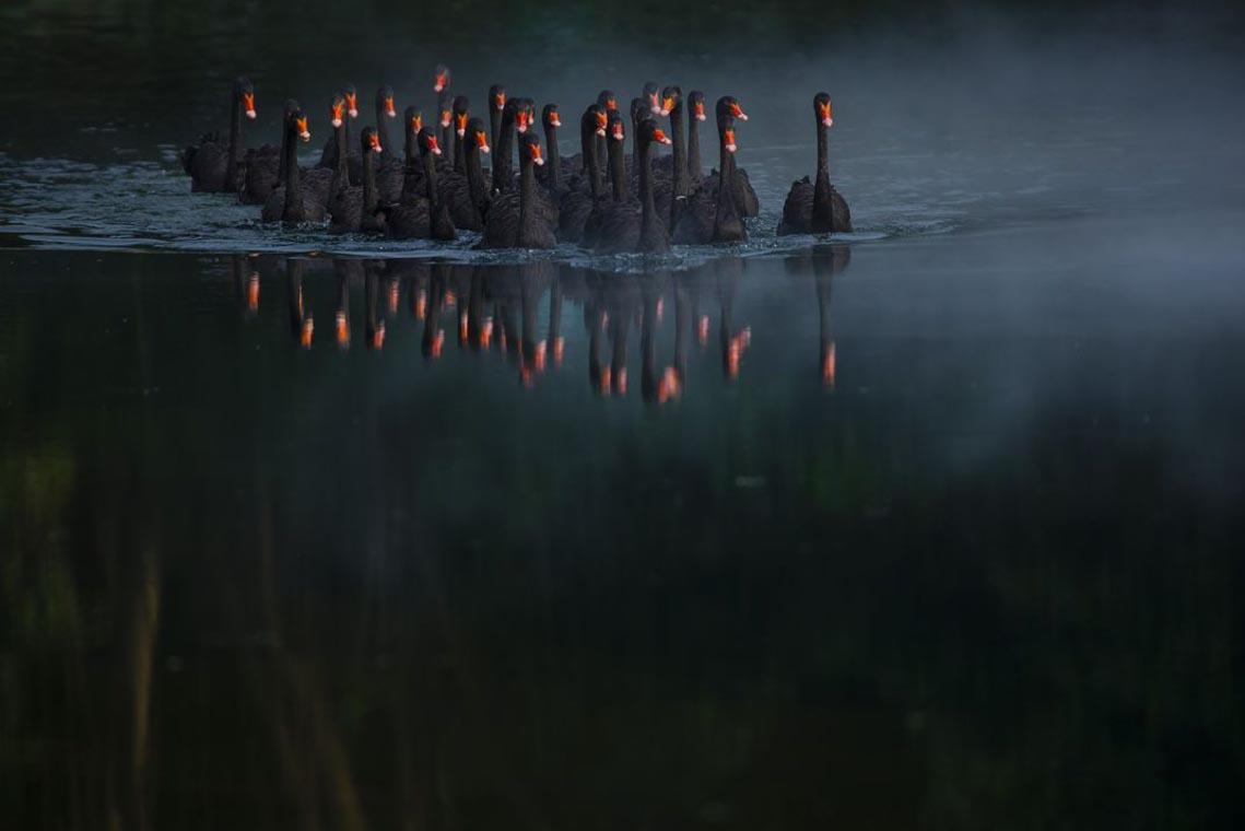 Xe bán cá cảnh rong ở Việt Nam chiến thắng giải ảnh tại Mỹ -10