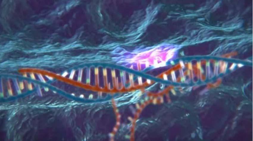 Crispr chỉnh sửa gien mở cửa một thế giới chưa sẵn sàng -3