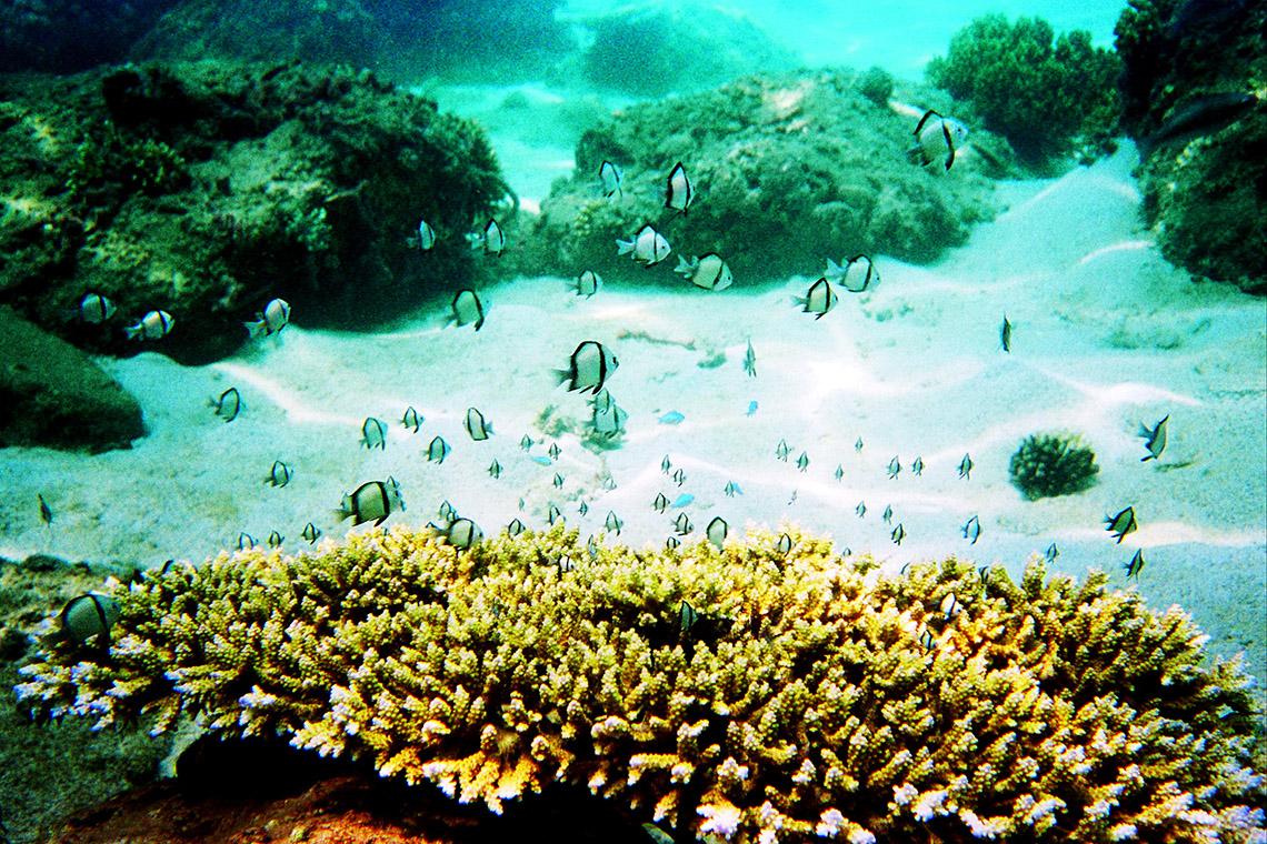 Hè đến rồi, lặn biển ngắm san hô nào! -1