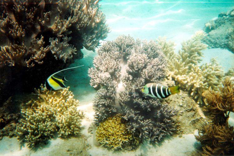 Hè đến rồi, lặn biển ngắm san hô nào! -2