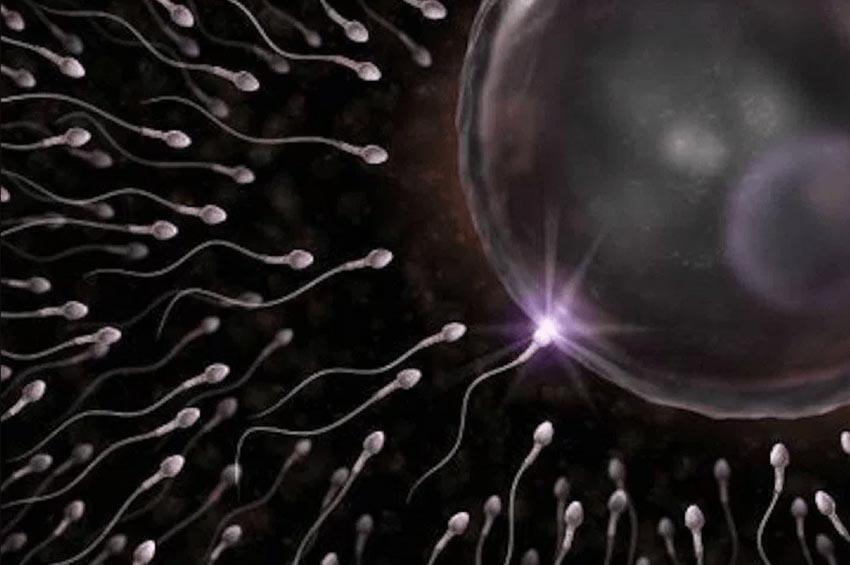 Sự thật về cuộc đua của tinh trùng -1