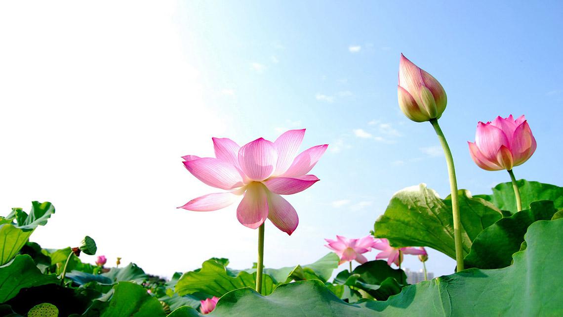 Suy ngẫm: Màu sắc và hương thơm -2