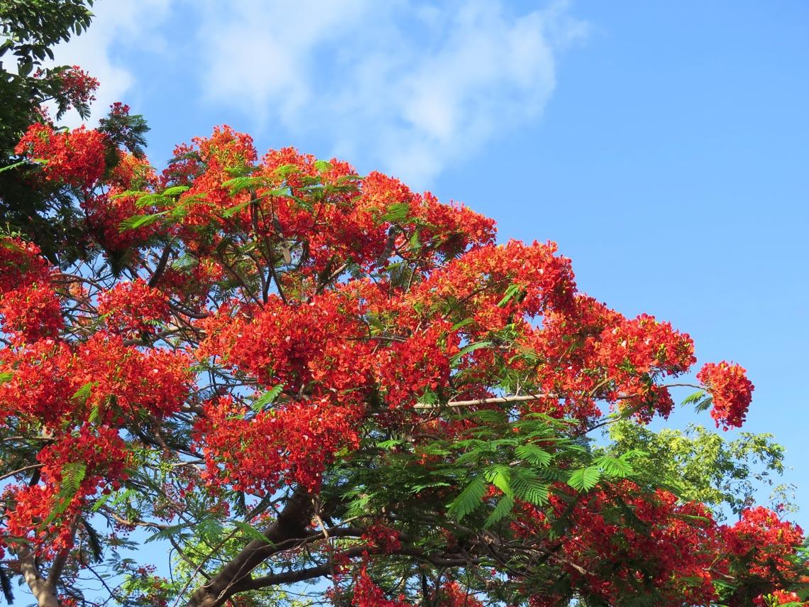 Thong dong Côn Đảo những ngày hè đẹp nhất trong năm -2