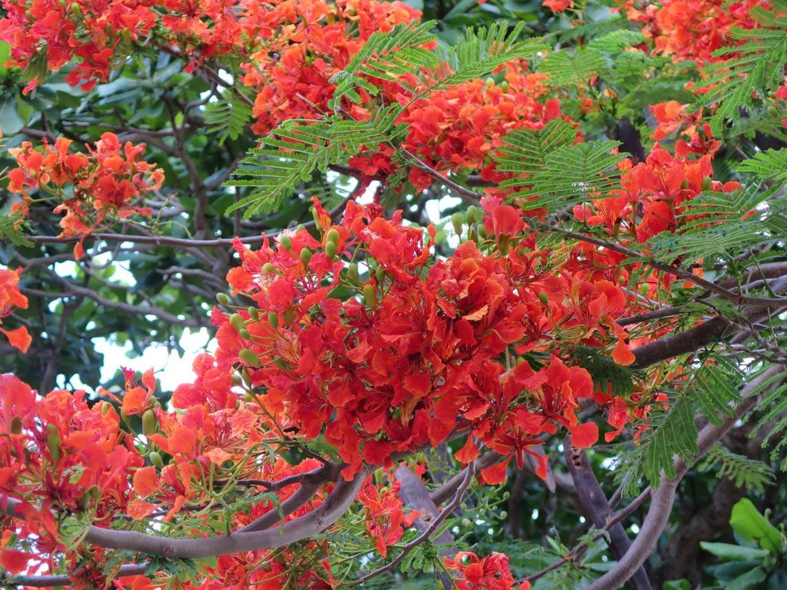 Thong dong Côn Đảo những ngày hè đẹp nhất trong năm -7