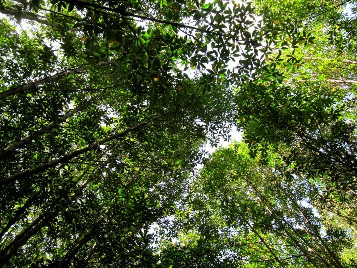 Giá trị rừng ngập mặn Cần Giờ và cuộc thi ảnh sau 20 năm vinh danh -5
