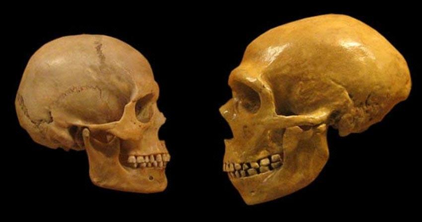 Những phát hiện mới nhất về người Neanderthal -2