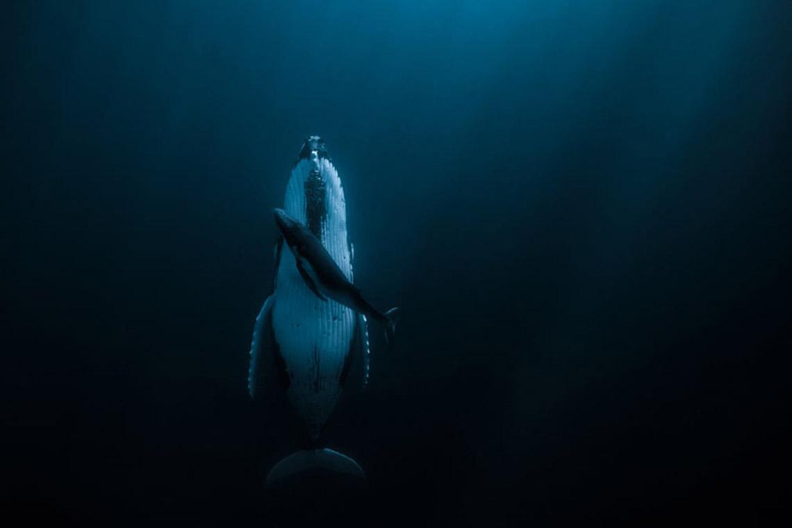 Sững sờ với 'nước' qua giải Nhiếp ảnh quốc tế Hamdan năm 2020 -6