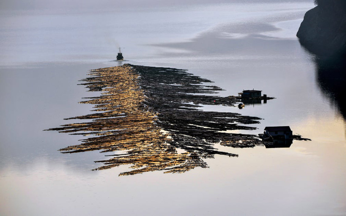 Sững sờ với 'nước' qua giải Nhiếp ảnh quốc tế Hamdan năm 2020 -7