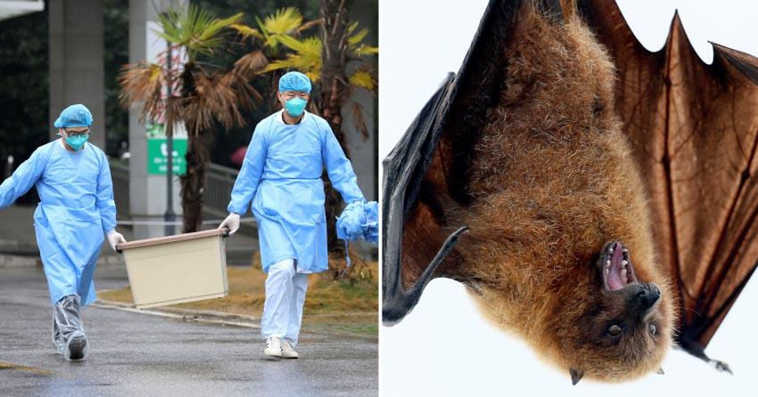 Loài người trong cuộc chiến với bệnh lây từ thú vật -8