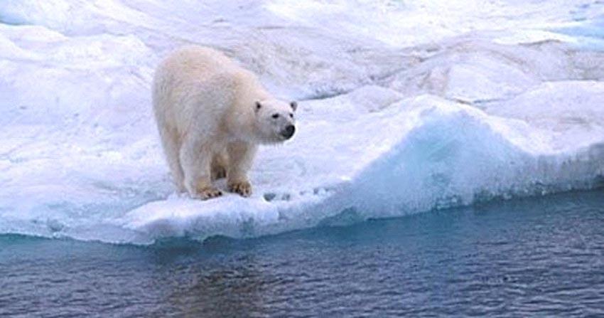 10 câu chuyện khó tin về việc sinh tồn ở Bắc Cực -1