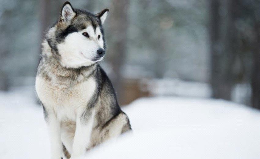 10 câu chuyện khó tin về việc sinh tồn ở Bắc Cực -10