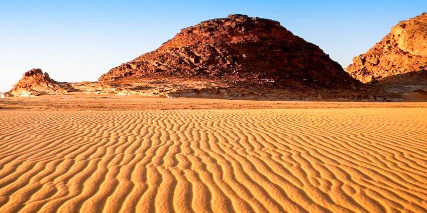 'Bức tường sống' chặn sa mạc hóa -1