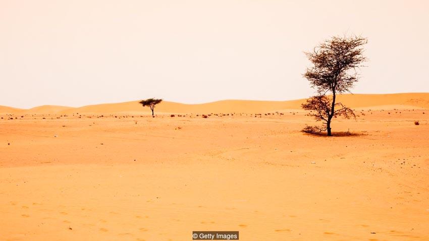 'Bức tường sống' chặn sa mạc hóa -8