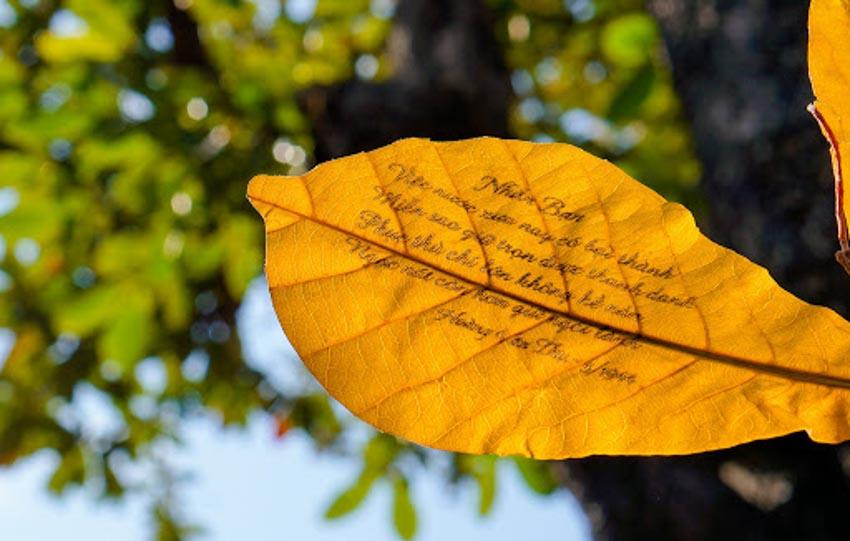 Chiếc lá trong thơ Việt -1
