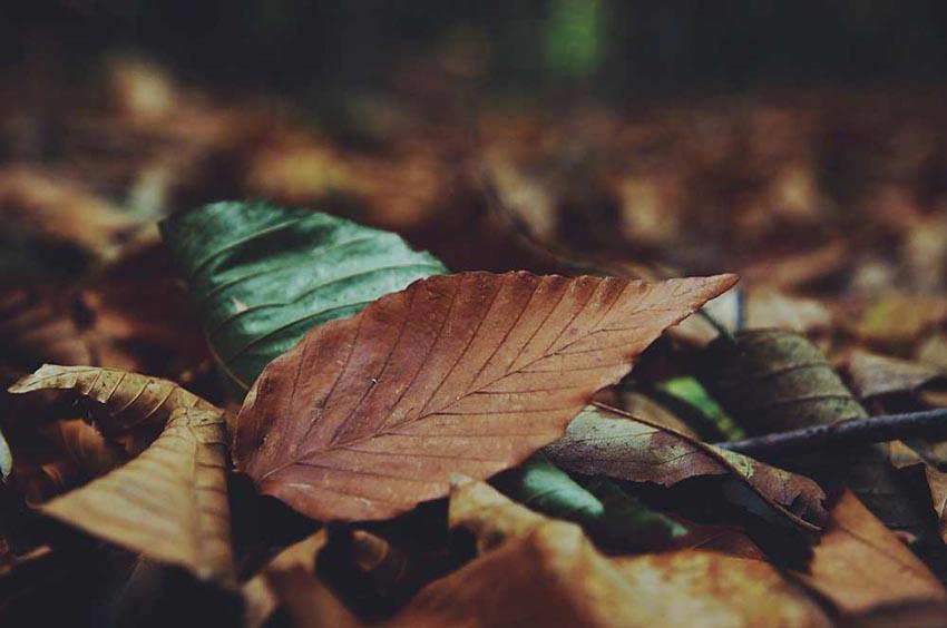 Chiếc lá trong thơ Việt -2