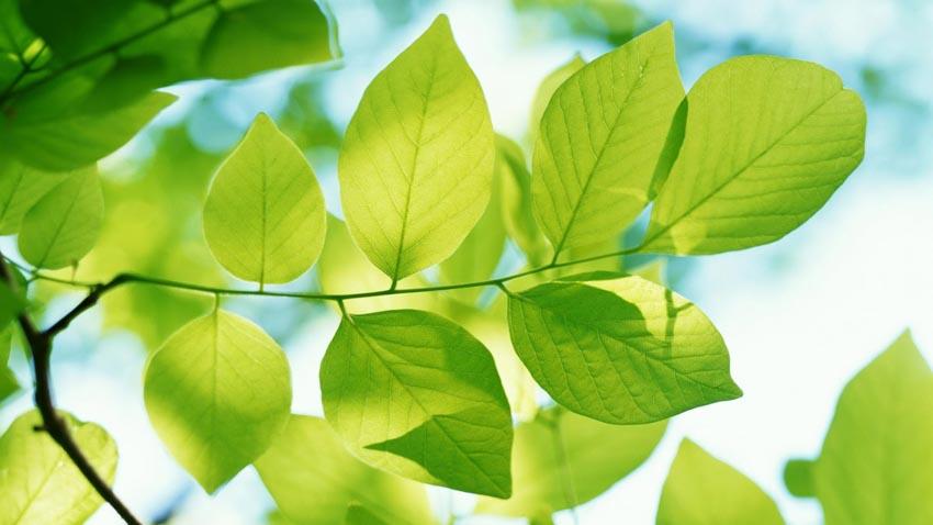 Chiếc lá trong thơ Việt -4