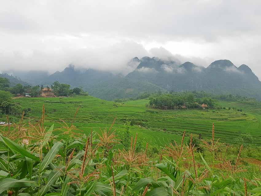 Chạm mây, ngửi hương lúa mới Pù Luông - 2