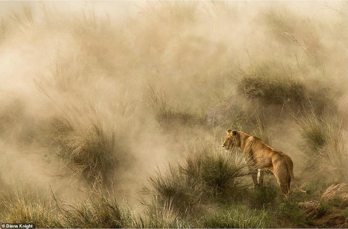 Mùa dịch ở nhà và ngắm thế giới tươi đẹp qua ống kính National Geographic Traveller -3