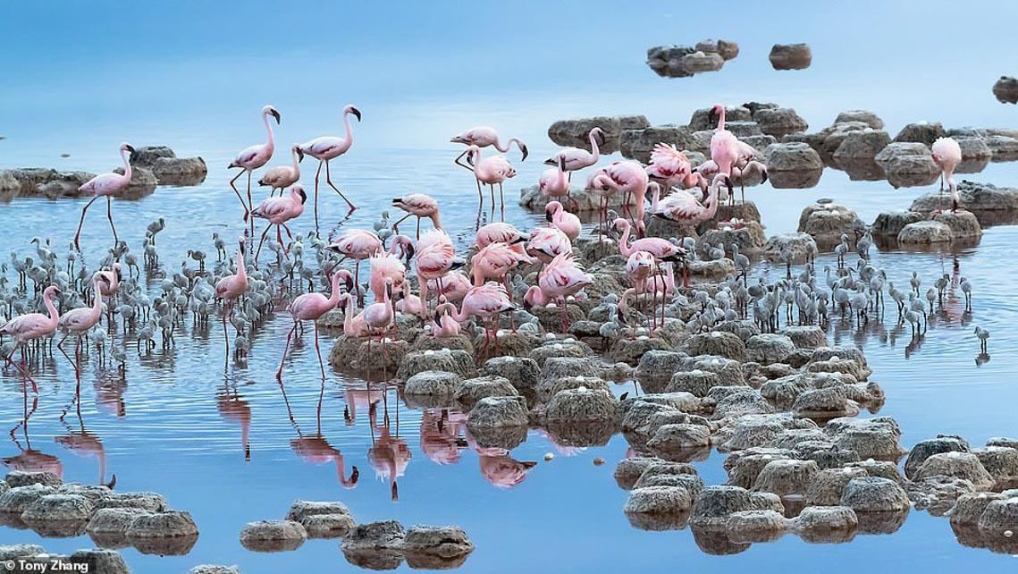 Mùa dịch ở nhà và ngắm thế giới tươi đẹp qua ống kính National Geographic Traveller -6
