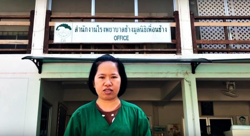 Voi Thái Lan: Ngành du lịch động vật u ám -2