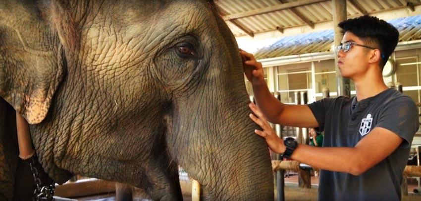 Voi Thái Lan: Ngành du lịch động vật u ám -5