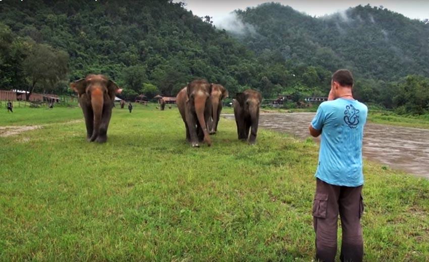 Voi Thái Lan: Ngành du lịch động vật u ám -7