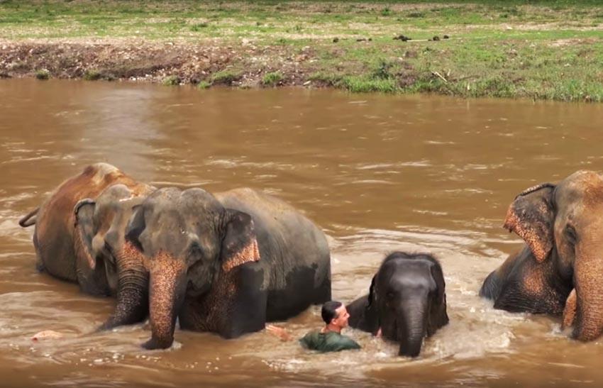Voi Thái Lan: Ngành du lịch động vật u ám -8
