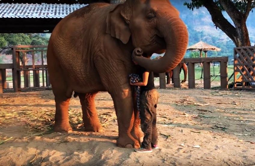 Voi Thái Lan: Ngành du lịch động vật u ám -9
