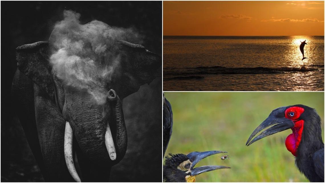 Những bức ảnh đoạt giải trong cuộc thi Nature inFocus Photography Awards 2020 -2