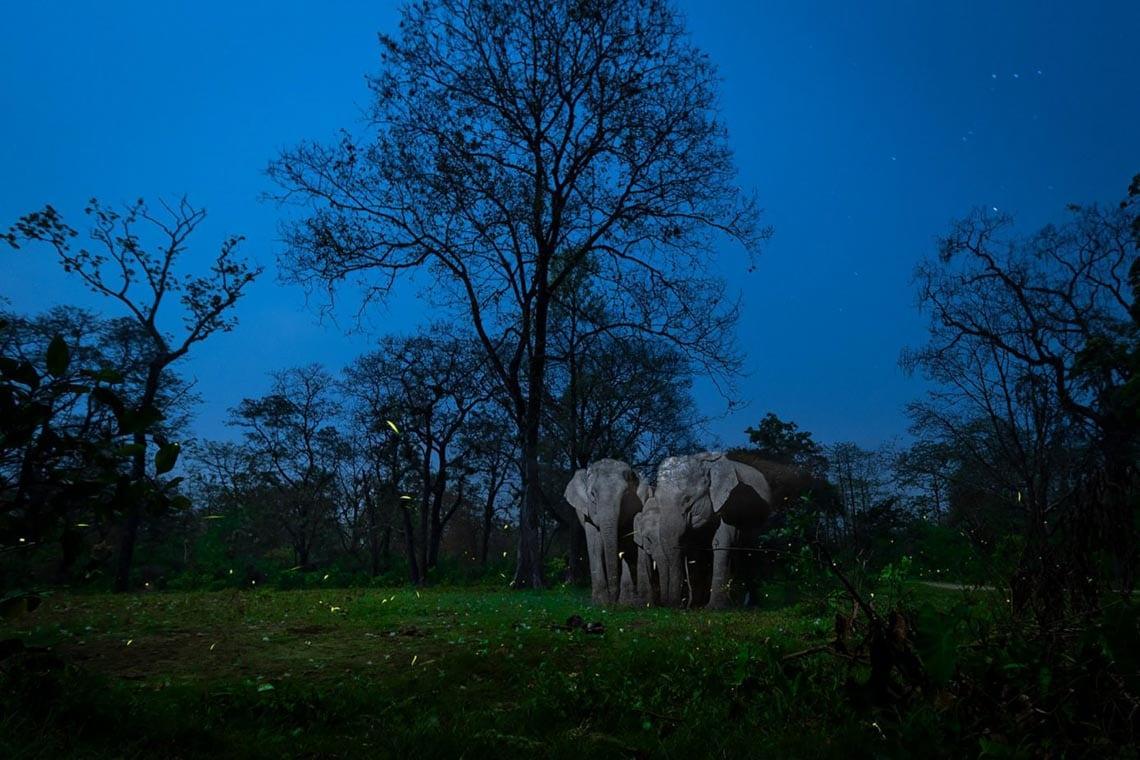 Những bức ảnh đoạt giải trong cuộc thi Nature inFocus Photography Awards 2020 -3