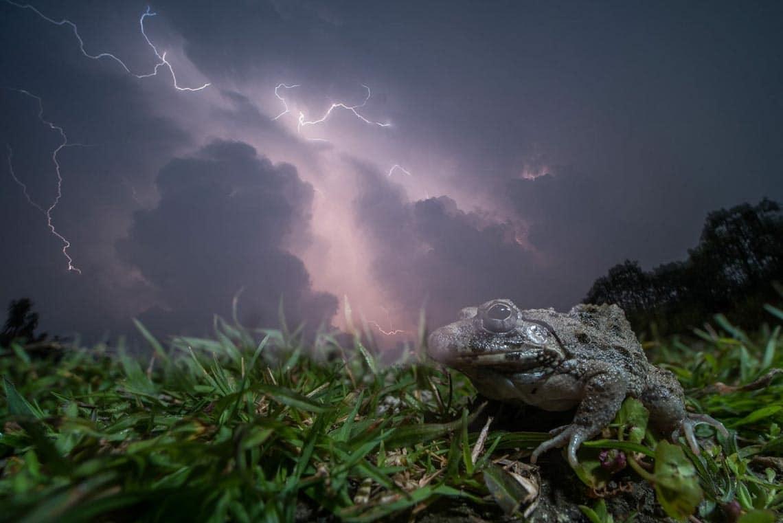 Những bức ảnh đoạt giải trong cuộc thi Nature inFocus Photography Awards 2020 -6
