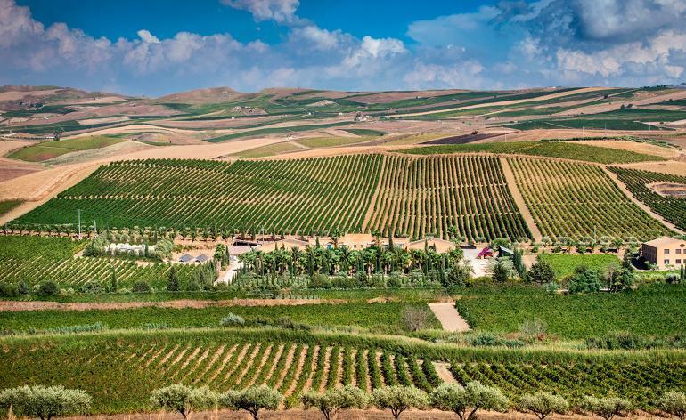 Rượu vang hồng Rosa vùng Sicilian mang tên Dolce & Gabbana - 3