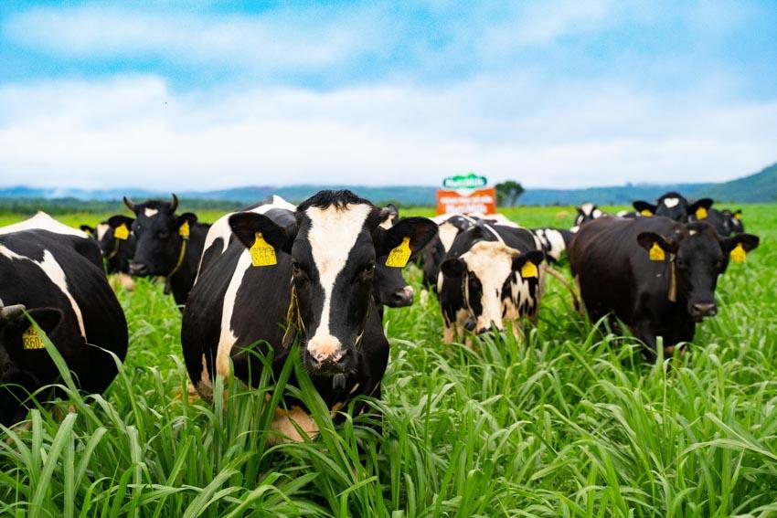 Sữa Việt Nam có đủ sức cạnh tranh với sữa châu Âu? -2