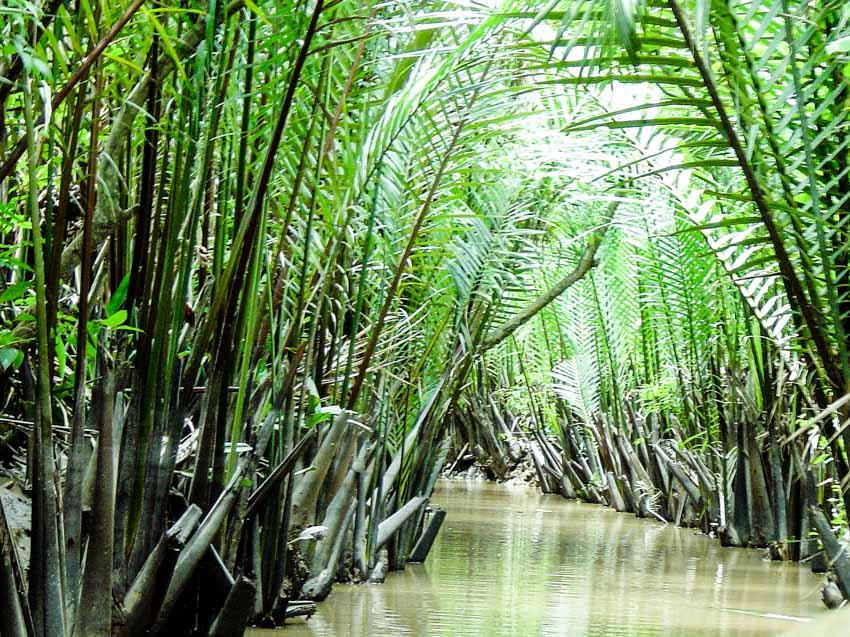 Trà dư tửu hậu: Dừa nước gợi nhớ hồn quê -1