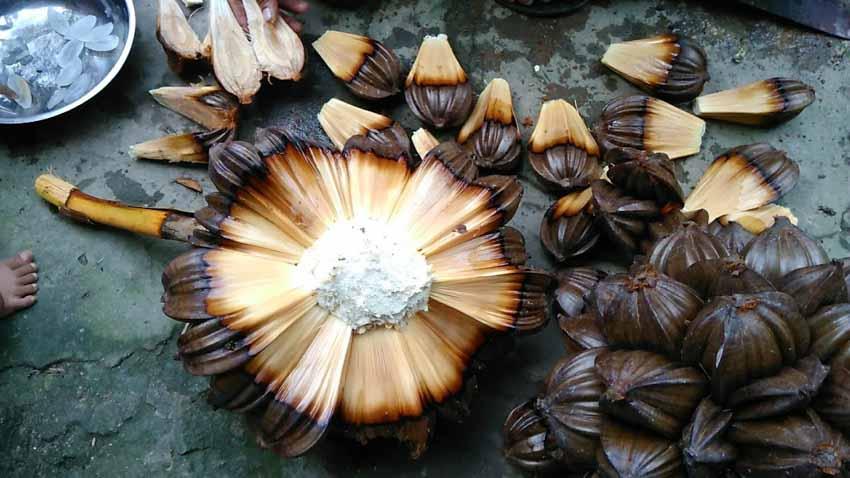 Trà dư tửu hậu: Dừa nước gợi nhớ hồn quê -3