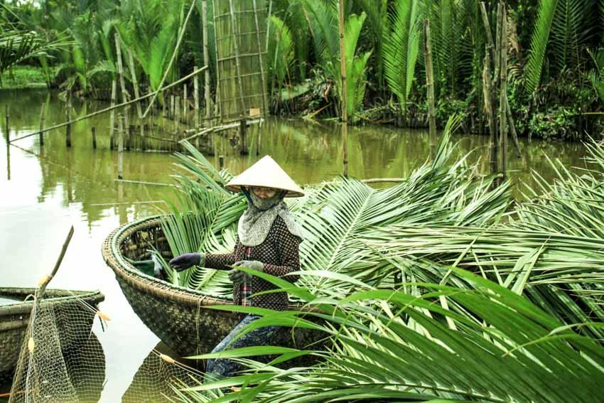 Trà dư tửu hậu: Dừa nước gợi nhớ hồn quê -4