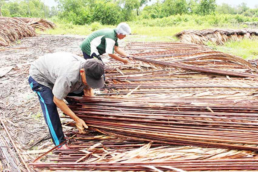 Trà dư tửu hậu: Dừa nước gợi nhớ hồn quê -5