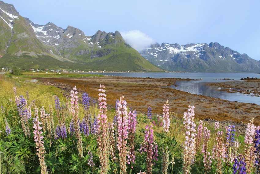 Độc đáo Lofoten: quần đảo ấm áp trong vòng Bắc cực -7